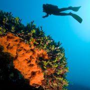 mediterranean diver