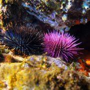 Underwater Naturalist Speciality