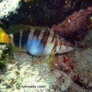 4fab94c6dbda3_marine_life_(4)