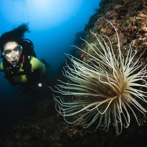 diving4